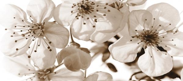 Fototapet FTG 0906 Flori [0]