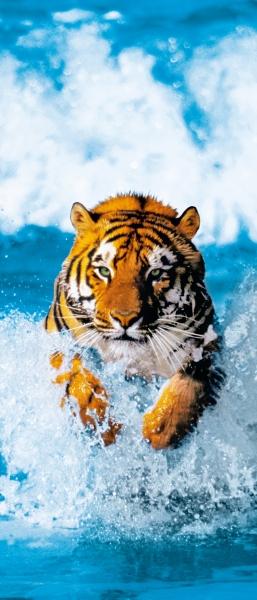 Fototapet 00590 Tigru bengalez 0