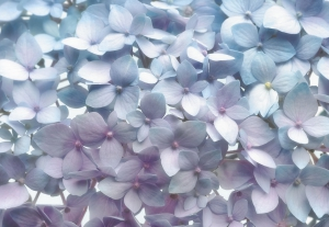 Fototapet 8-961 Albastru deschis [0]