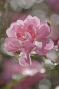 Fototapet 4-713 Bouquet [0]