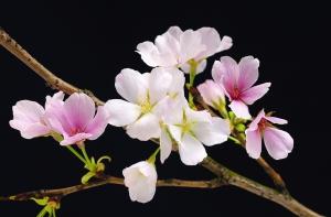 Fototapet 00627 Flori de cires [0]