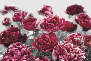 Fototapet XXL4-002 Flori rosii [0]