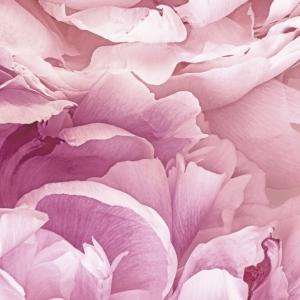 Fototapet XXL2-009 Flori roz [1]