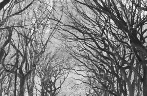 Fototapet 00607 Poteca poetilor New York [0]