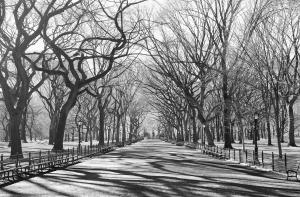 Fototapet 00607 Poteca poetilor New York [1]