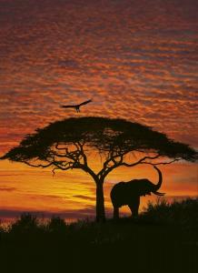 Fototapet 4-501 Apus African [0]