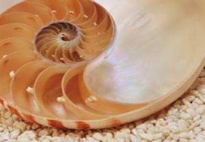 Fototapet 1-601 Nautilus [0]