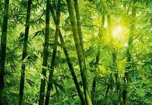 Fototapet 00123 Padurea de bambus [0]