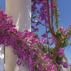Fototapet 8-931 Amalfi [1]