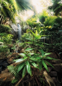Fototapet XXL2-527 Cascada in jungla [0]