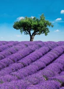 Fototapet 00309 Provence [0]