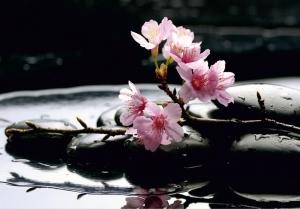Fototapet FTS 0185 Flori roz si pietre [0]