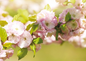 Fototapet FTM 0487 Floral0