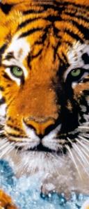 Fototapet 00590 Tigru bengalez1