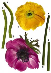 Sticker decorativ 17012 Anemone [1]
