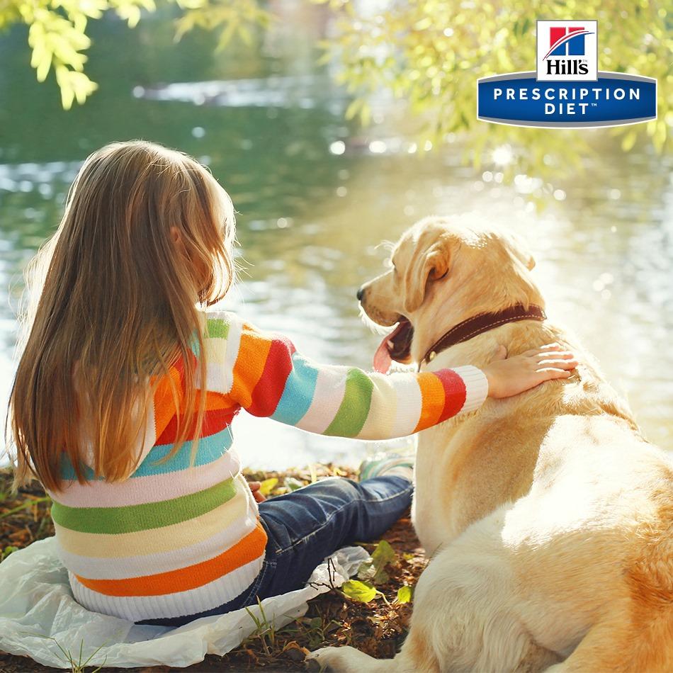 Cum hrănim corect câinele?
