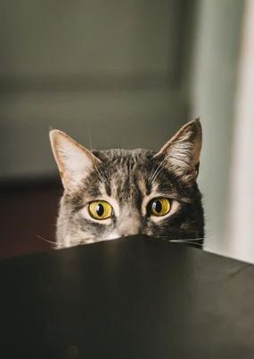Care este cea mai bună mâncare pentru pisici