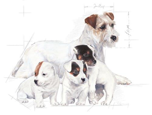 Royal Canin Babydog Milk inlocuitor lapte matern caine, 400 g 1