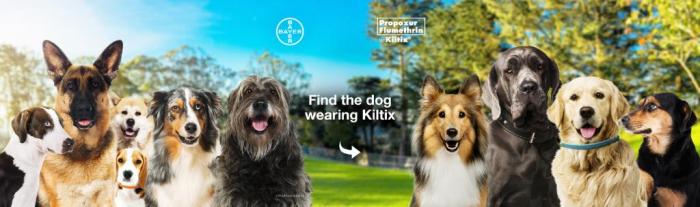 Zgardă antiparazitară pentru câini de talie medie (53 cm) - Kiltix 1