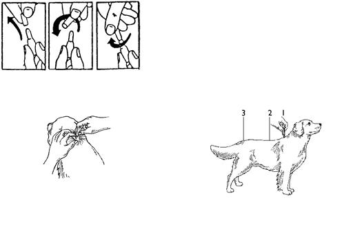 Deparazitare externa caini [1]