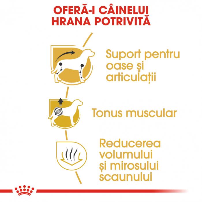 Royal Canin Dachshund Adult hrana uscata caine Teckel, 1.5 kg 3