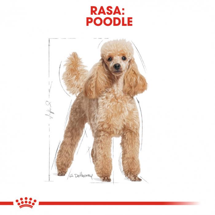 Royal Canin Poodle Adult hrana uscata caine, 1.5 kg 1