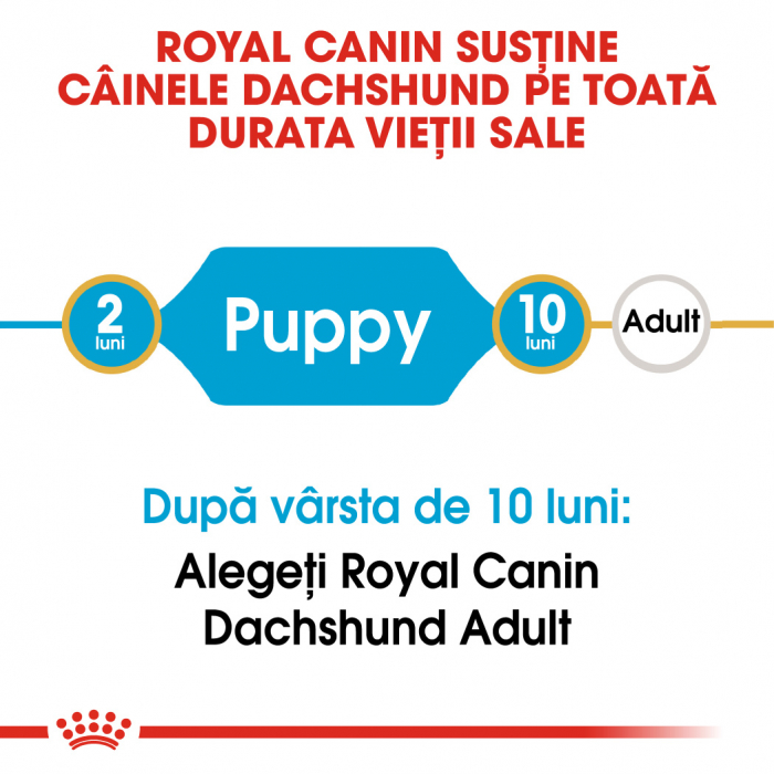 Royal Canin Dachshund Puppy hrana uscata caine junior Teckel, 1.5 kg 1