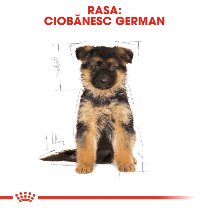 Royal Canin German Shepherd Puppy  hrana uscata caine junior Ciobanesc German, 3 kg 4
