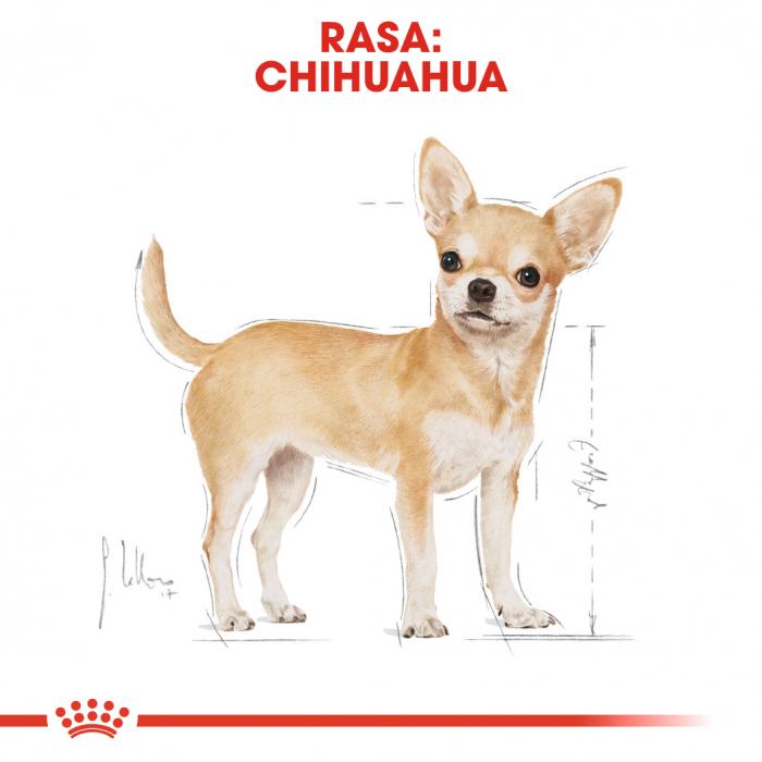 Royal Canin Chihuahua Adult hrana umeda caine, 12 x 85 g [1]