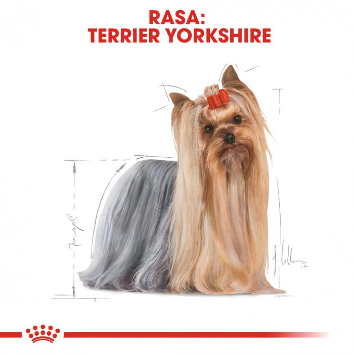 Royal Canin Yorkshire Terrier Adult hrana umeda caine, 12 x 85 g 1