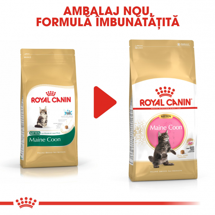 Royal Canin Maine Coon Kitten hrana uscata pisica junior, 10 kg 5
