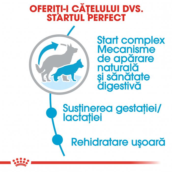 Royal Canin Maxi Starter Mother & Babydog gestatie/ lactatie pui hrana uscata caine, 15 kg 4