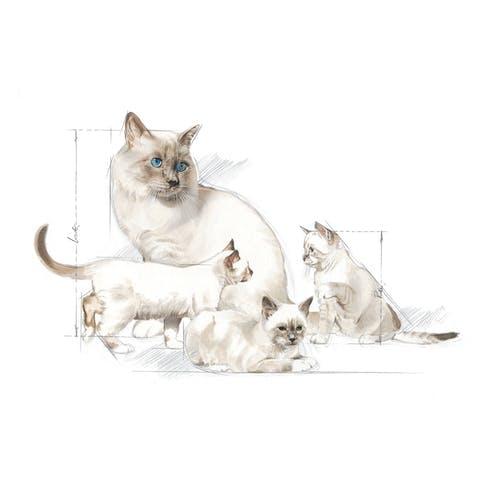 Royal Canin BabyCat Milk inlocuitor lapte matern pisica, 400 g 1