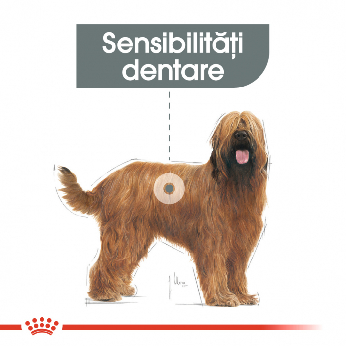 Royal Canin Maxi Dental Care Adult hrana uscata caine pentru reducerea formarii tartrului, 9 kg 3