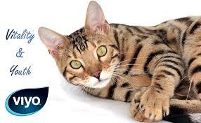 Supliment Nutritiv pentru pisici Viyo Reinforces Cat 30 x 30ml [1]