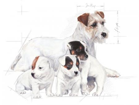 Royal Canin Babydog Milk inlocuitor lapte matern caine, 400 g1
