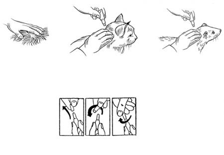Deparazitare externa pisici, Advocate Cat 4-8 kg x 3 pipete1