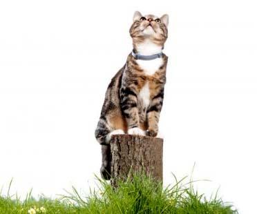 Foresto Zgardă Antiparazitară pentru pisici  (38 cm)1