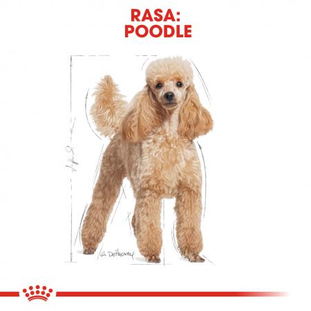 Royal Canin Poodle Adult hrana uscata caine, 1.5 kg1