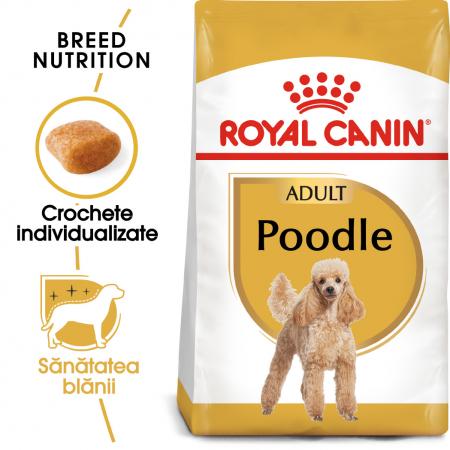 Royal Canin Poodle Adult hrana uscata caine, 1.5 kg0