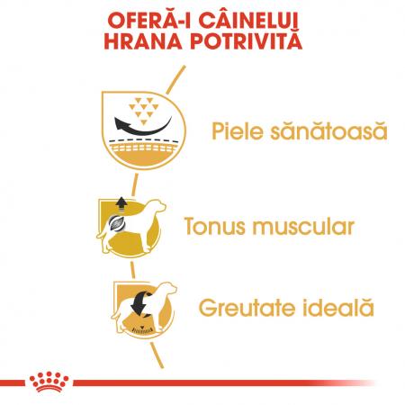 Royal Canin Pug Adult hrana uscata caine, 1.5 kg3