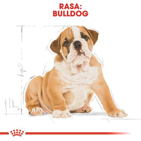 Royal Canin Bulldog Puppy hrana uscata junior, 3 kg4