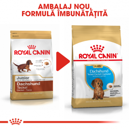 Royal Canin Dachshund Puppy hrana uscata caine junior Teckel, 1.5 kg6
