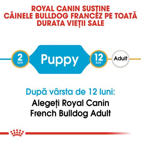 Royal Canin French Bulldog Puppy hrana uscata caine junior, 3 kg [1]
