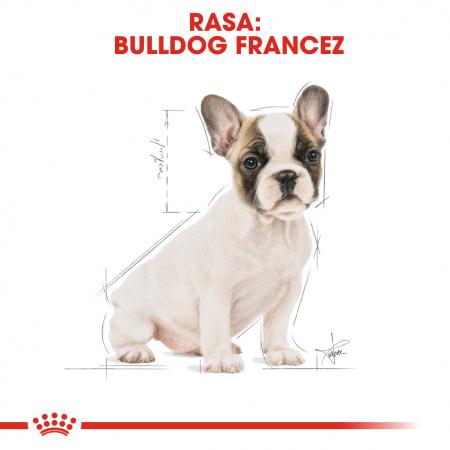 Royal Canin French Bulldog Puppy hrana uscata caine junior, 3 kg [4]