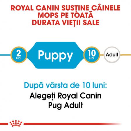 Royal Canin Pug Puppy hrana uscata caine junior, 1.5 kg1