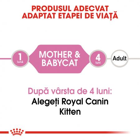 Royal Canin Mother & BabyCat hrana umeda pisica mama si puii pana la 4 luni, 195 g1