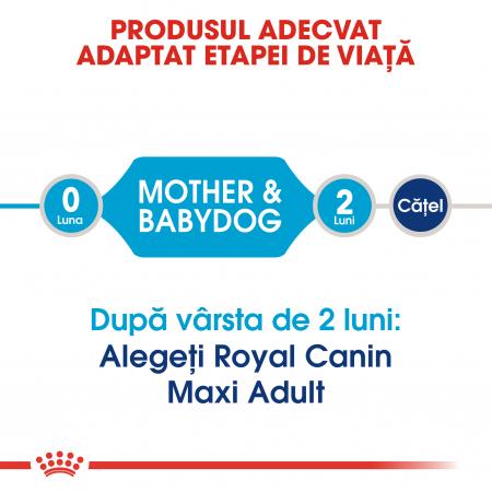 Royal Canin Maxi Starter Mother & Babydog gestatie/ lactatie pui hrana uscata caine, 15 kg3