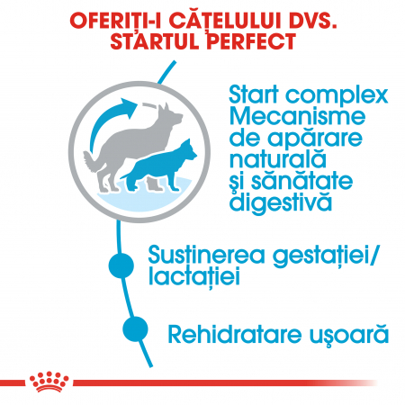 Royal Canin Maxi Starter Mother & Babydog gestatie/ lactatie pui hrana uscata caine, 15 kg4
