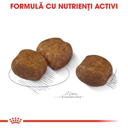 Royal Canin Maxi Dental Care Adult hrana uscata caine pentru reducerea formarii tartrului, 9 kg2